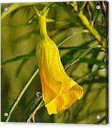Really Yellow Flower Acrylic Print