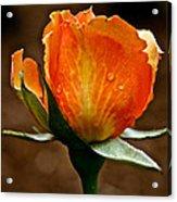 Recent Raindrops Acrylic Print