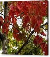 Red And Green Prior X-mas Acrylic Print