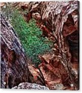Red And Green Acrylic Print by Rick Berk