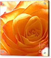 Red And Orange Rose Acrylic Print
