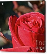 Red And Ready For Review Acrylic Print