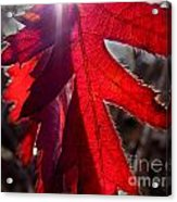 Red And Shadows Acrylic Print