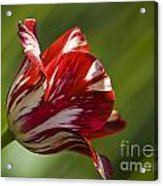 Red And White   Rouge Et Blanc Acrylic Print