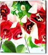 Red And White Fuschias Acrylic Print
