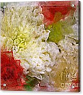 Red And White Mums Photoart Acrylic Print