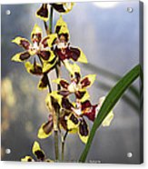 Red And White Orchid  Acrylic Print