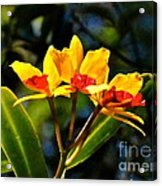 Red And Yellow Orchid Acrylic Print