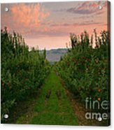 Red Apple Sunset Acrylic Print by Mike  Dawson