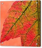 Red Autumn Acrylic Print by Carol Leigh