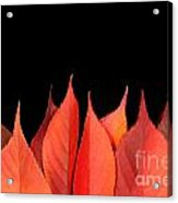Red Autumn Leaves On Edge Acrylic Print