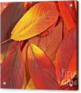 Red Autumn Leaves Pile Acrylic Print