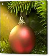 Red Ball In A Real Caucasian Fir Christmas Tree Acrylic Print