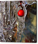Red Berry In Icicle Acrylic Print