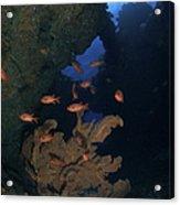 Red Bigeye Fish And Sea Fan In An Acrylic Print by Mathieu Meur