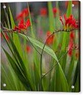 Red Blade Symmetry Acrylic Print