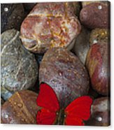 Red Butterfly On Rocks Acrylic Print