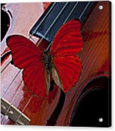 Red Butterfly On Violin Acrylic Print