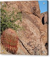 Red Cactus Rock Acrylic Print
