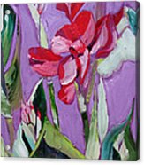 Red Canna Lily Acrylic Print by Suzanne Willis