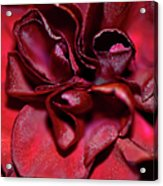 Red Carnation With Heart Acrylic Print