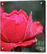 Red Crystal Petals Acrylic Print