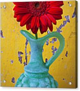 Red Daisy In Grape Vase Acrylic Print