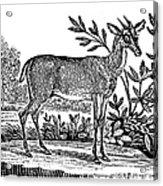 Red Deer Acrylic Print by Granger