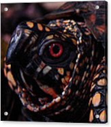 Red Eye Acrylic Print