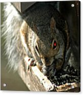 Red Eyed Demon Squirrel Acrylic Print
