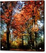 Red Fall Acrylic Print