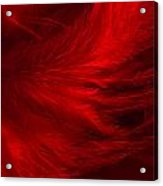 Red Feathers - 1 Acrylic Print
