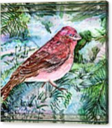 Red Finch Acrylic Print by Mindy Newman