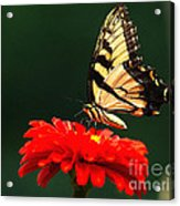 Red Flower And Butterfly Acrylic Print
