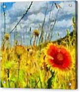 Red Flower In The Field Acrylic Print