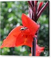 Red Flower With Bug Acrylic Print