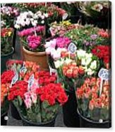 Red Flowers In French Flower Market Acrylic Print