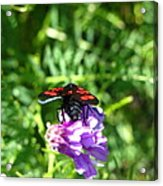 Red Fly Acrylic Print