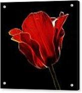 Red Fractal Tulip Acrylic Print