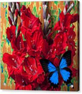 Red Gladiolus And Blue Butterfly Acrylic Print