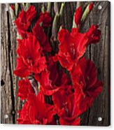 Red Gladiolus Acrylic Print