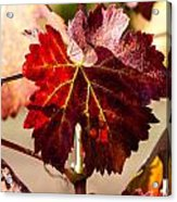 Red Grapeleaves Acrylic Print