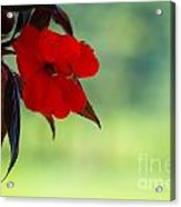 Red Hanging Plant Acrylic Print