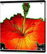 Red Hibiscus With Special Effects Acrylic Print