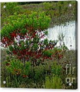 Red In Green Acrylic Print