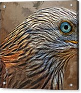 Red Kite - Featured In The Groups - Spectacular Artworks And Wildlife Acrylic Print