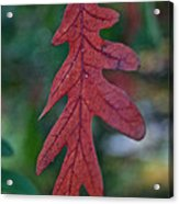 Red Leaf Hanging Acrylic Print
