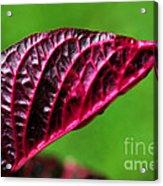 Red Leaf Acrylic Print by Kaye Menner