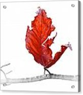 Red Leaf Of Autumn On White Acrylic Print
