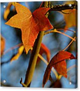 Red Leaves In Winter Sunset Acrylic Print